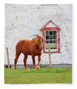 Horse At Panmure Island Lighthouse 5756 Fleece Blanket