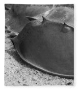 Horseshoe Crab Fleece Blanket