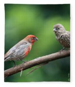 House Finch Courtship Fleece Blanket