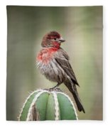 House Finch Perched On Cactus  Fleece Blanket