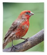 House Finch Fleece Blanket