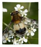 Hoverfly Leucozona Lucorum Fleece Blanket