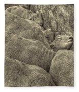 Huddled Yearling Rams Fleece Blanket
