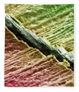 Human Tooth Dentine, Sem Fleece Blanket