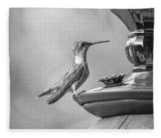 Hummingbird Intrigue  Fleece Blanket