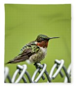 Hummingbird On A Fence Fleece Blanket