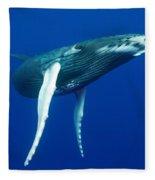 Humpback Whale Calf Fleece Blanket
