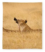 Hungry Lions Fleece Blanket