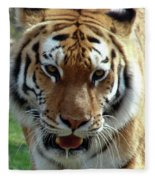 Hungry Tiger Fleece Blanket