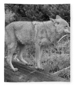 Hunting With Ears Back Black And White Fleece Blanket