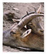 Ibex Mother And Son Fleece Blanket