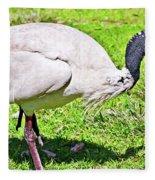 Ibis Looking For Food Fleece Blanket