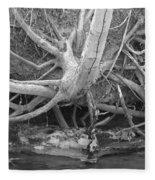 Twisted Roots  Fleece Blanket