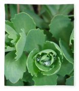 Ice Plant  Fleece Blanket