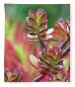 California Red Tip Crassula Ovata Jade Plant Fleece Blanket