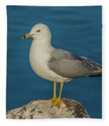 Idaho Sea Gull Fleece Blanket