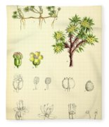 Illustrations Of The Flowering Plants And Ferns Of The Falkland Fleece Blanket