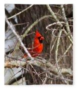 Img_0806 - Northern Cardinal Fleece Blanket