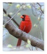 Img_0999-001 - Northern Cardinal Fleece Blanket