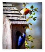 Img_1154 - Eastern Bluebird Fleece Blanket
