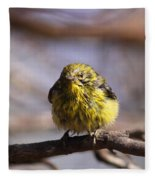 Img_9853 - Pine Warbler -  Very Wet Fleece Blanket