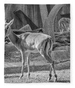 Impala    Black And White Fleece Blanket