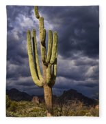 In Search Of That Perfect Saguaro  Fleece Blanket