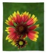 Indian Blanket Flower - Gaillardia Fleece Blanket