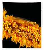 Indonesia, Goby Fleece Blanket