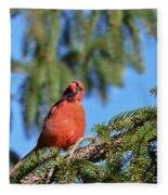 Inquisitive Male Cardinal Fleece Blanket