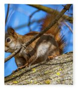Inquisitive Squirrel Fleece Blanket