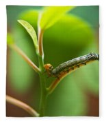 Insect Larva 5 Fleece Blanket