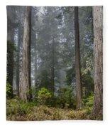 Into The Redwood Forest Fleece Blanket