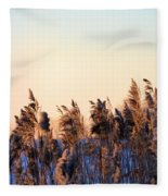 Iowa Cane Fleece Blanket