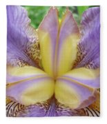Irises Art Purple Yellow Iris Flowers Giclee Prints Baslee Troutman  Fleece Blanket