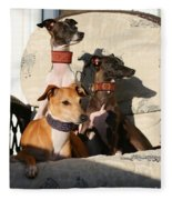 Italian Greyhounds Fleece Blanket