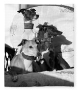 Italian Greyhounds In Black And White Fleece Blanket