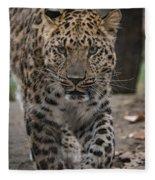 Jaguar On The Prowl Fleece Blanket