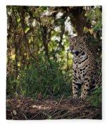 Jaguar Sitting In Trees In Dappled Sunlight Fleece Blanket