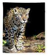 Jaguar Stare Fleece Blanket
