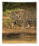 Jaguar Walking Beside River In Dappled Sunlight Fleece Blanket