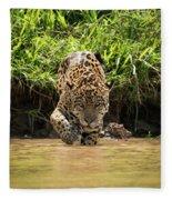 Jaguar Walking Through Muddy Shallows Towards Camera Fleece Blanket