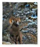 Jasper Alpha Male Fleece Blanket