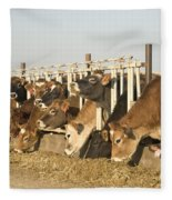 Jersey Cows Feeding Fleece Blanket