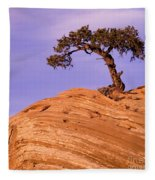 Juniper On Sandstone Fleece Blanket