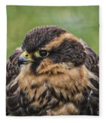 Juvenile Aplomado Falcon Fleece Blanket