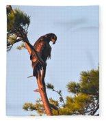 Juvenile Bald Eagle Fleece Blanket
