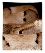 Juvenile Brazilian Lancehead Fleece Blanket