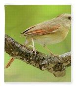 Juvenile, Female Cardinal, Animal Portrait Fleece Blanket