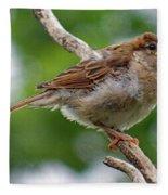 Juvenile House Sparrow Fleece Blanket